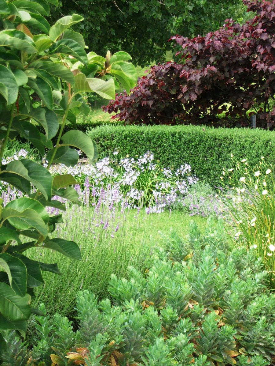 Plants shrubs grass