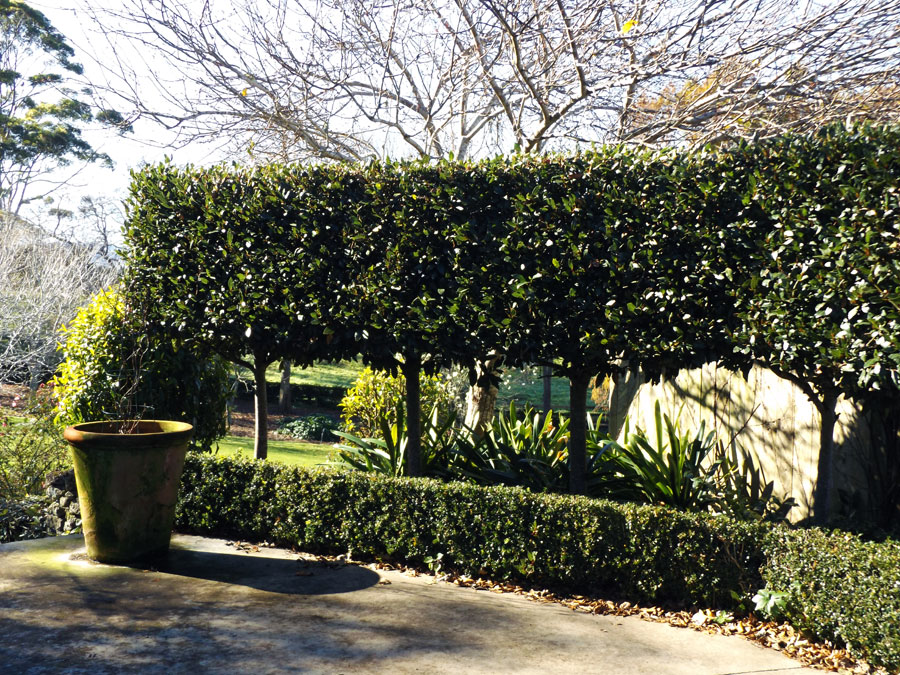 Sculpted hedge