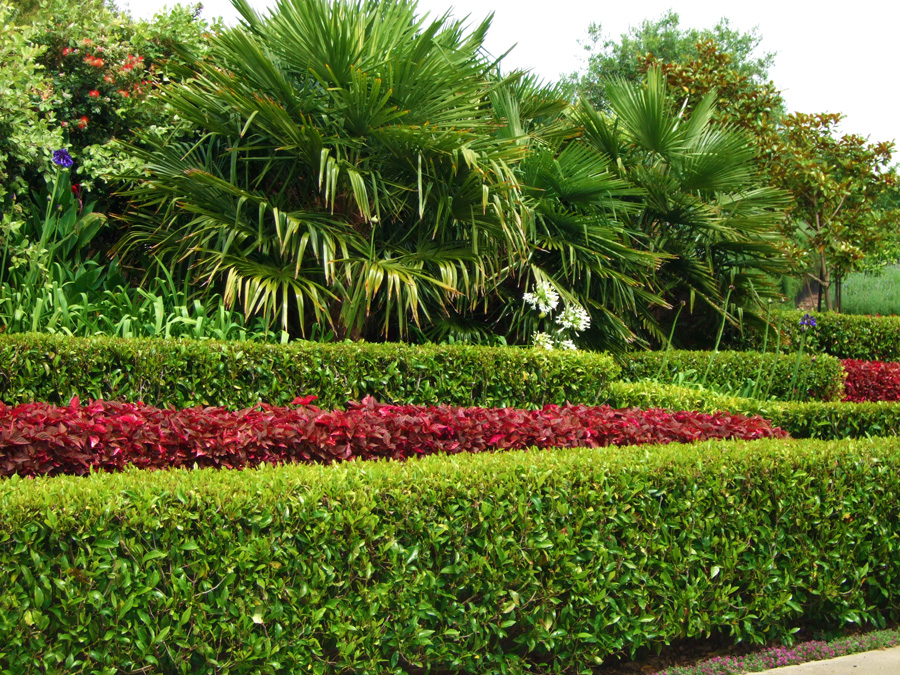 Colourful box hedging