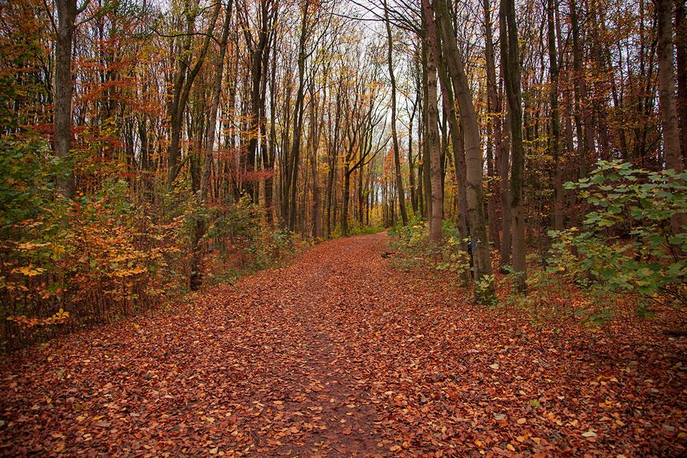 Joggen und die Natur genießen im Kruppwald © offguide
