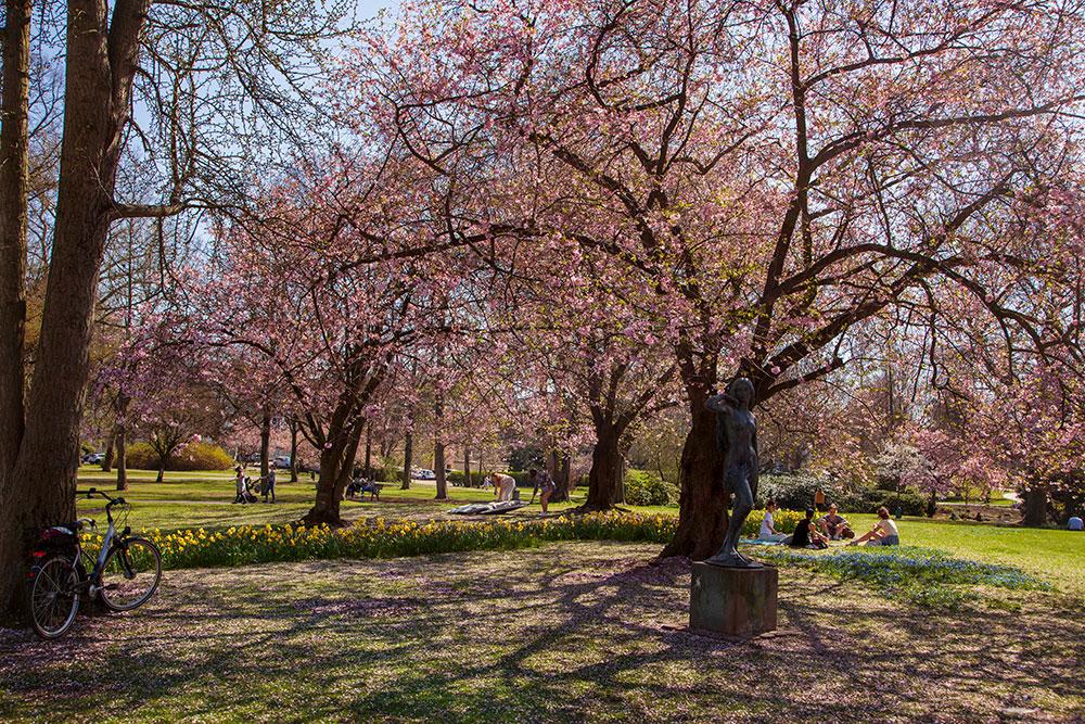 Kirschblüte: Orte für rosa Blütenzauber in Essen Stadtgarten© offguide