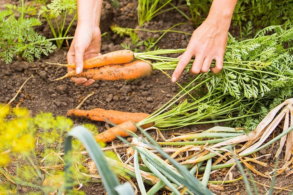 Gärtnern ohne Schrebergarten