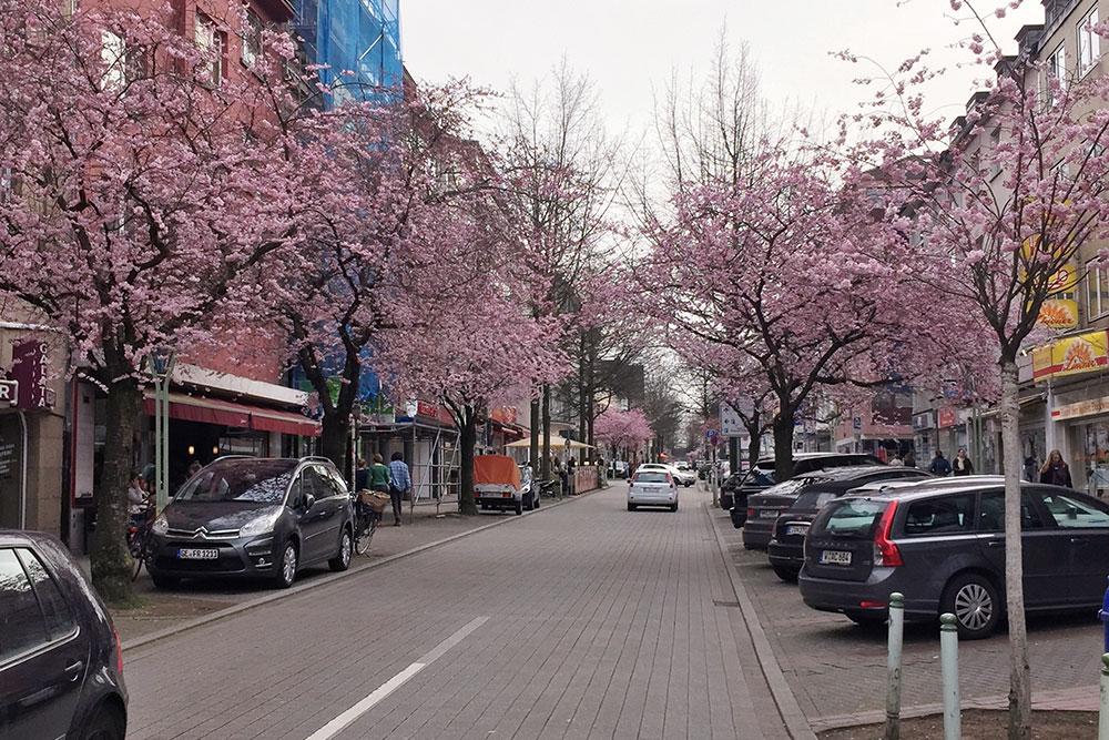Kirschblüte: Orte für rosa Blütenzauber in Essen Rüttenscheider Straße