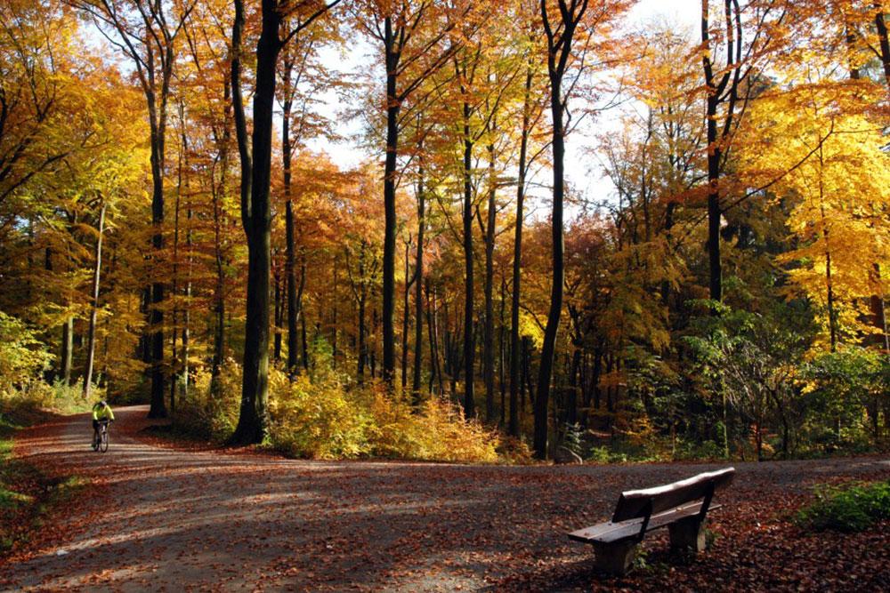 Laufen durch den idyllischen Stadtwald