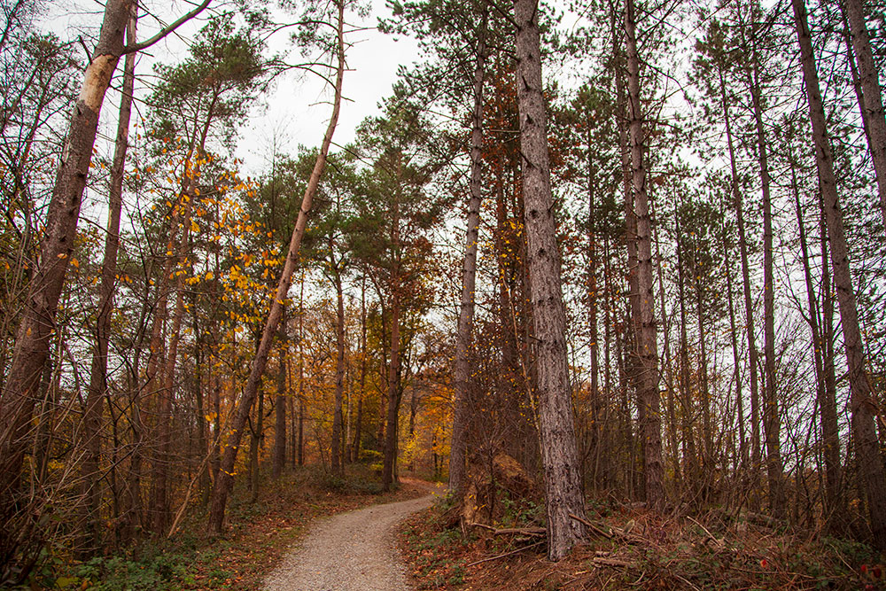Auf Wiesen- und Waldpfaden unterwegs im Kettwiger Stadtwald © offguide