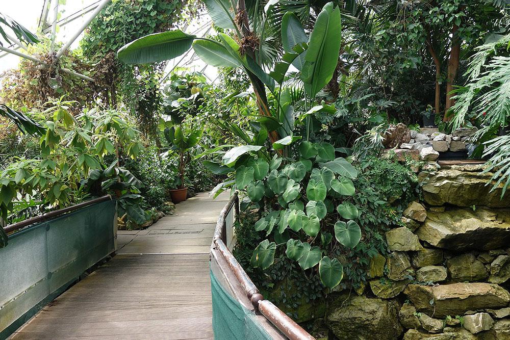 Frühlingsgefühle im Botanischen Garten