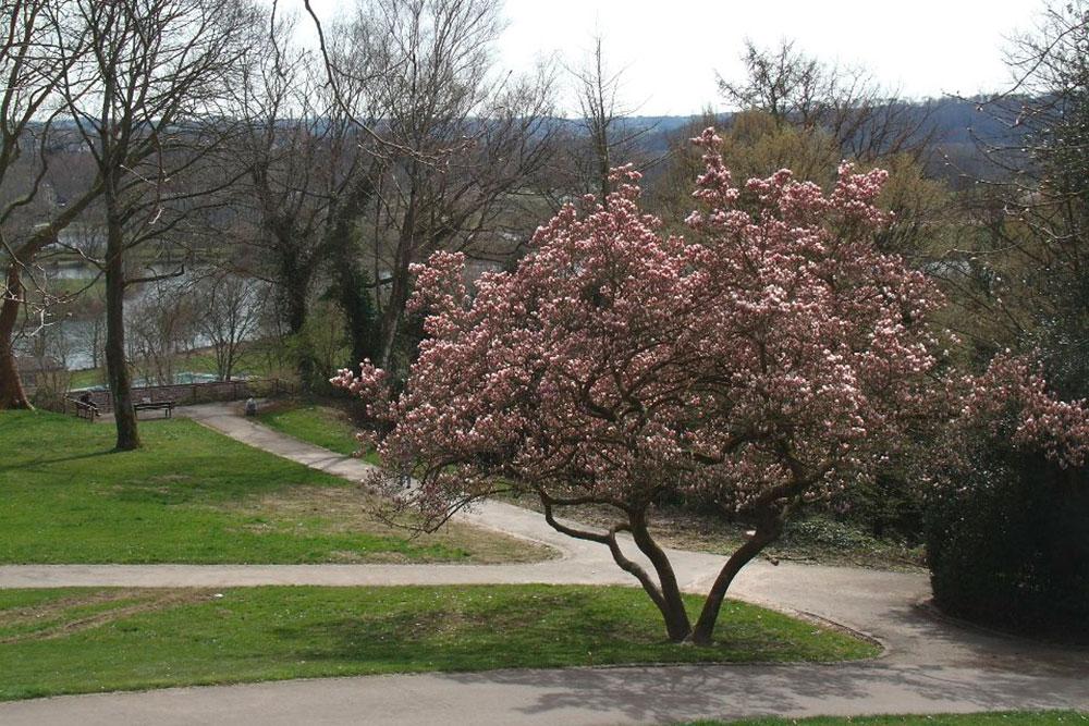 Kirschblüte: Orte für rosa Blütenzauber in Essen Stadtgarten Steele