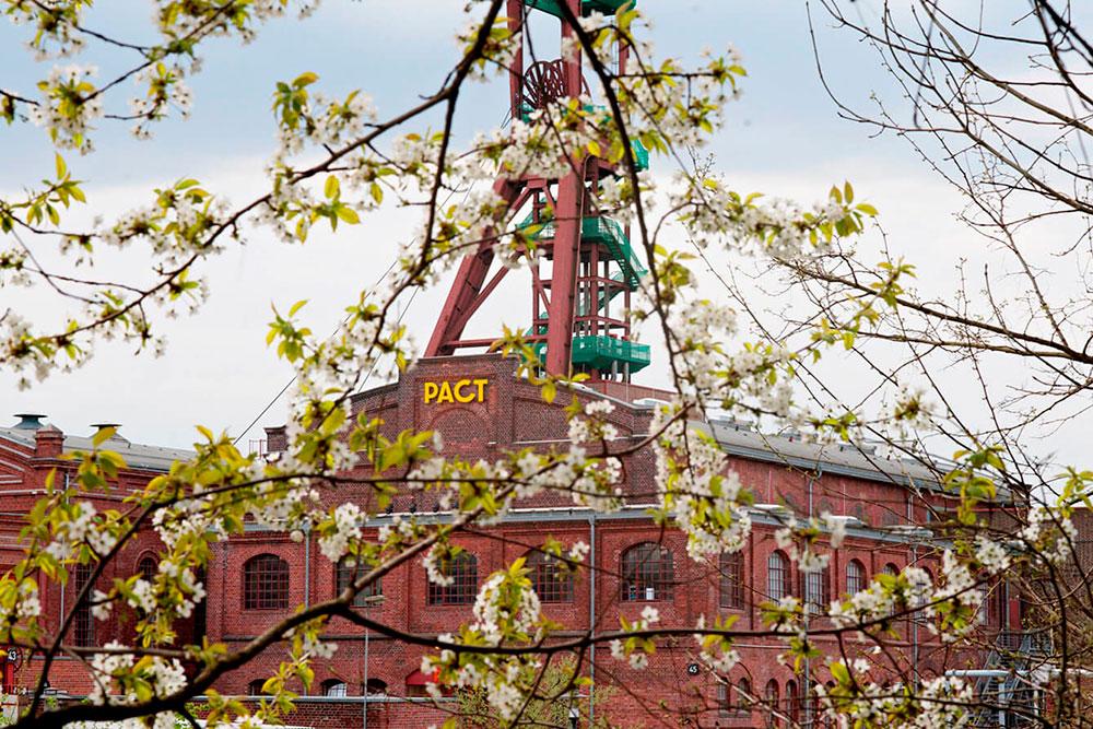 Kirschblüte: Orte für rosa Blütenzauber in Essen Pact Zollverein