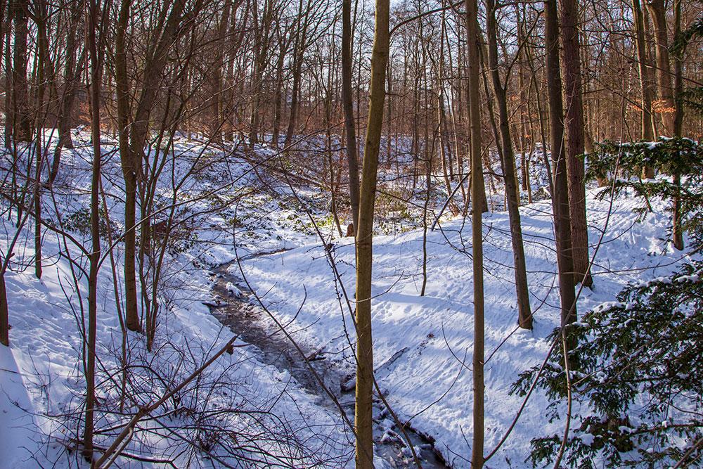 Winterliche Spaziergänge in Essen Frintroper Höhe © offguide