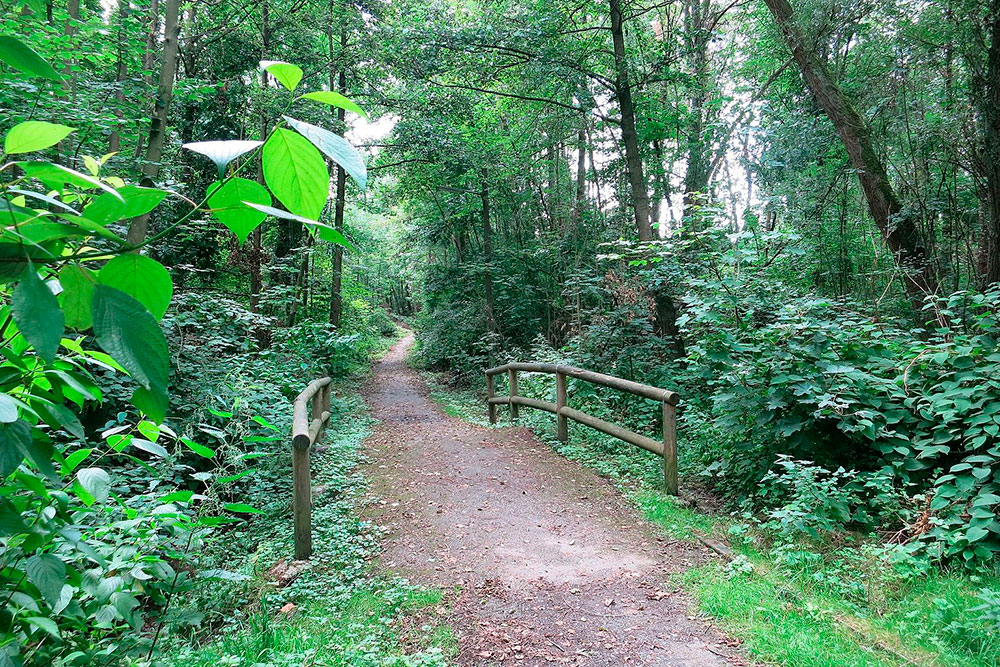 Waldpfad mit Holzgelaende und Wanderweg in der  Schoenebecker Schweiz
