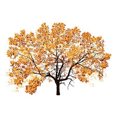 the tree - graphene radiator image