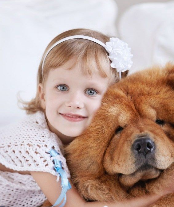 Safe For Pets: Furry Family Members Also Matter