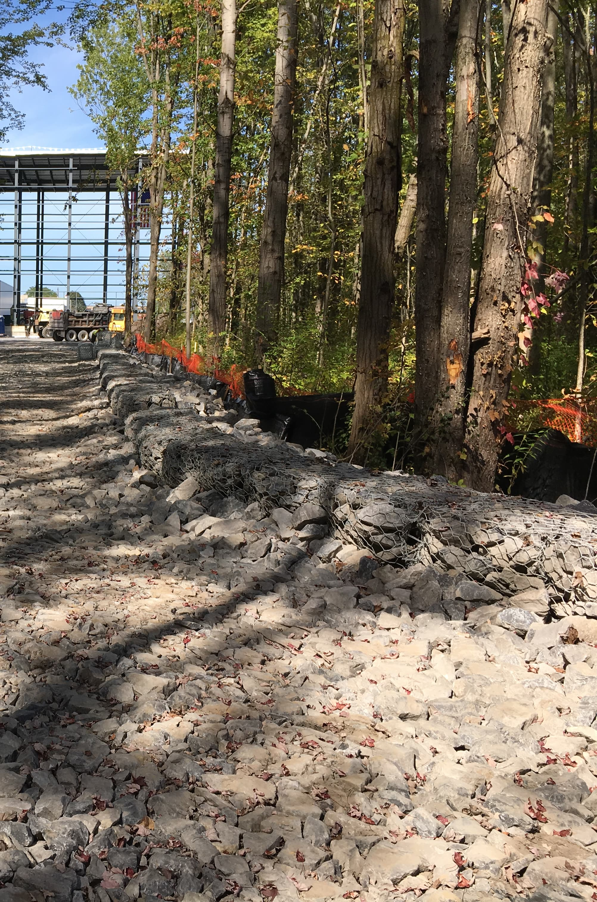 retaining wall in forest