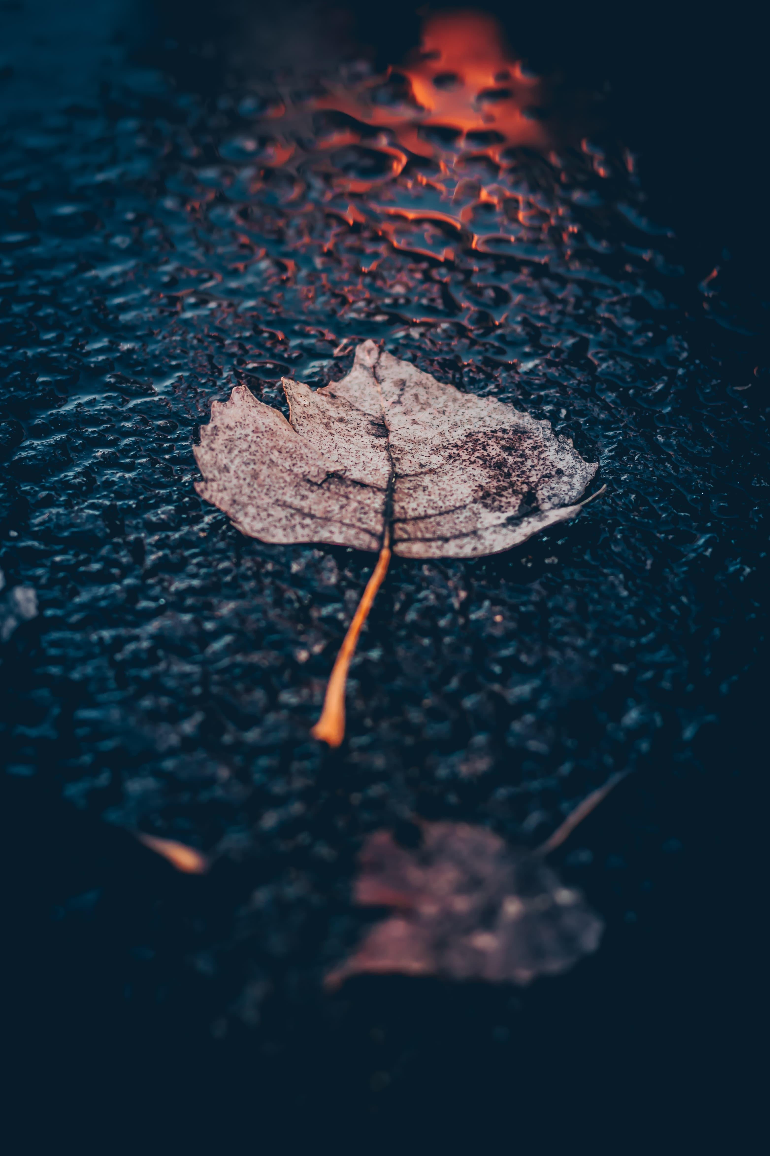 leaf floating on rain water