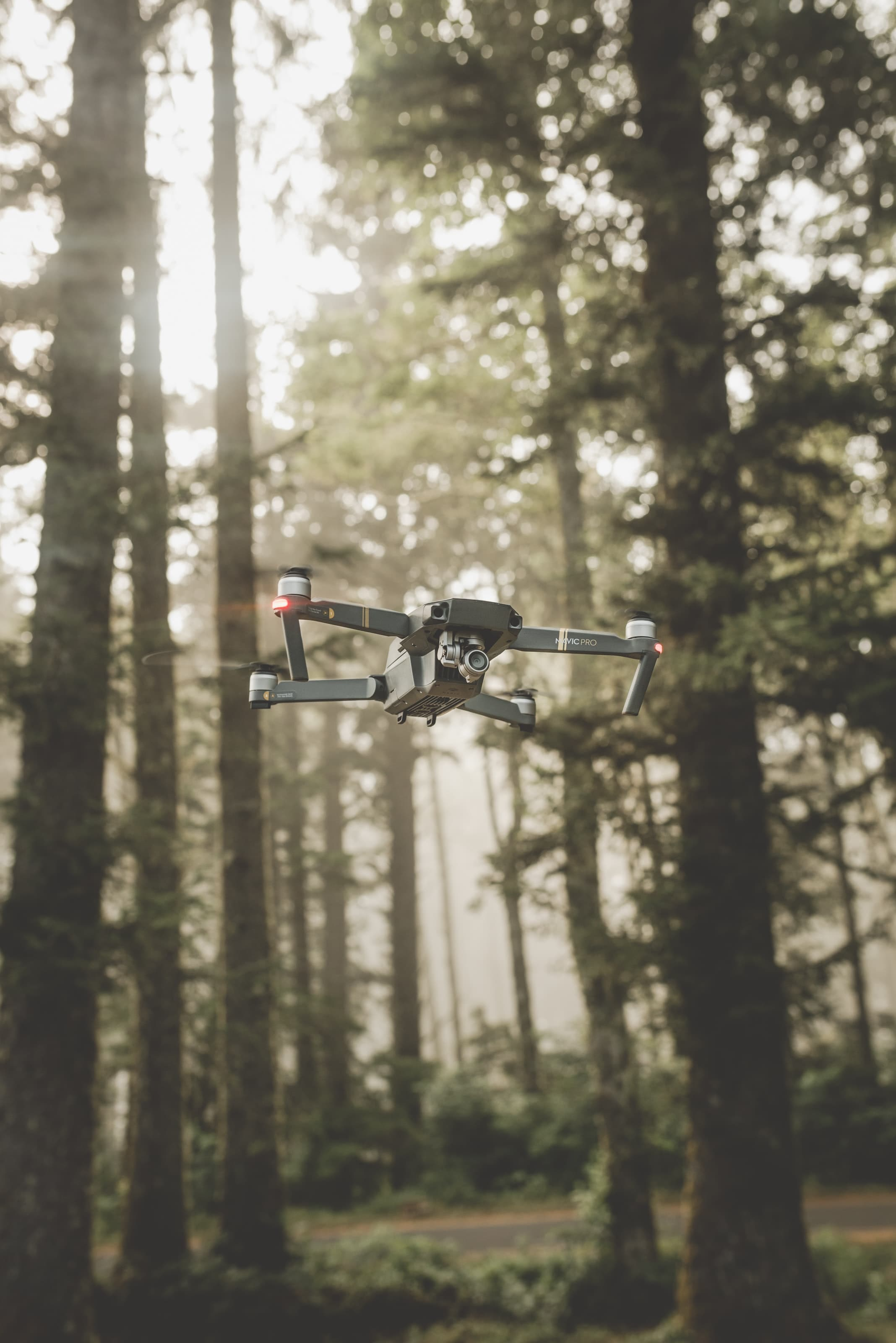 drone in forest