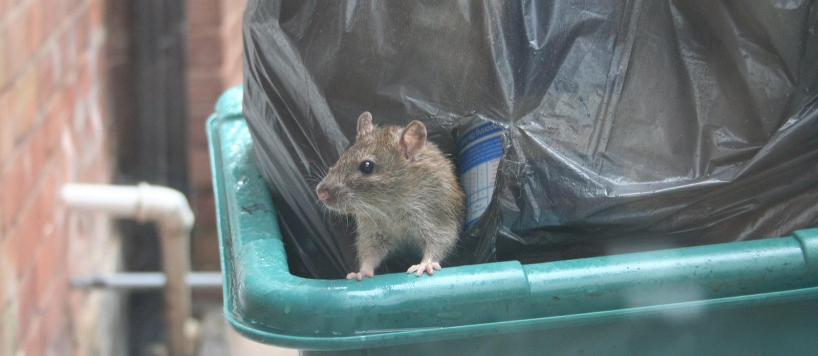 Een muis die uit een container klimt