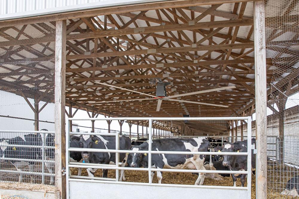 Ceiling fan in a Dairy Barn