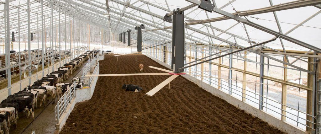 Big Ceiling fans for bedded pack dairy barns