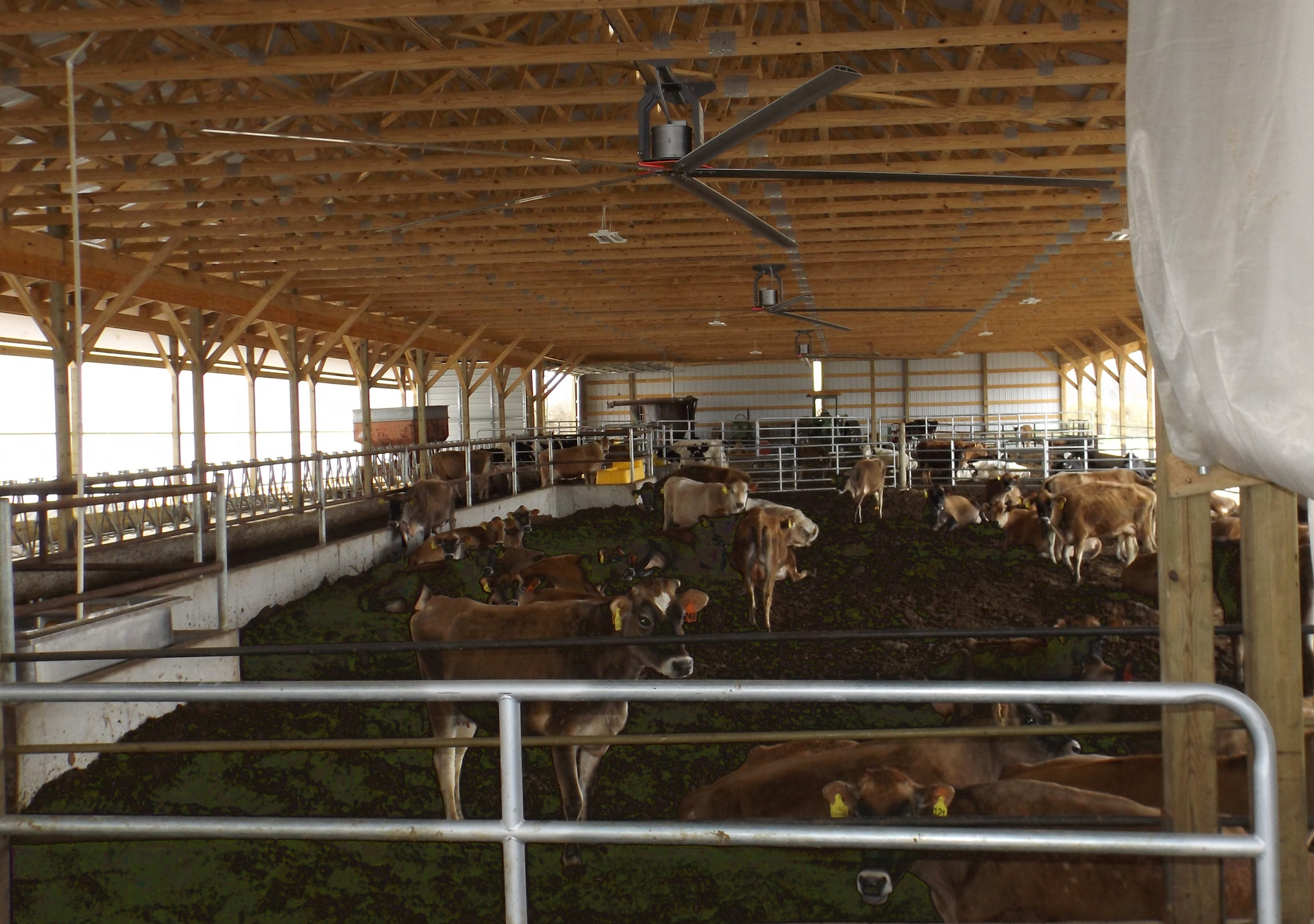 Compost Bed pack barn with ceiling fans