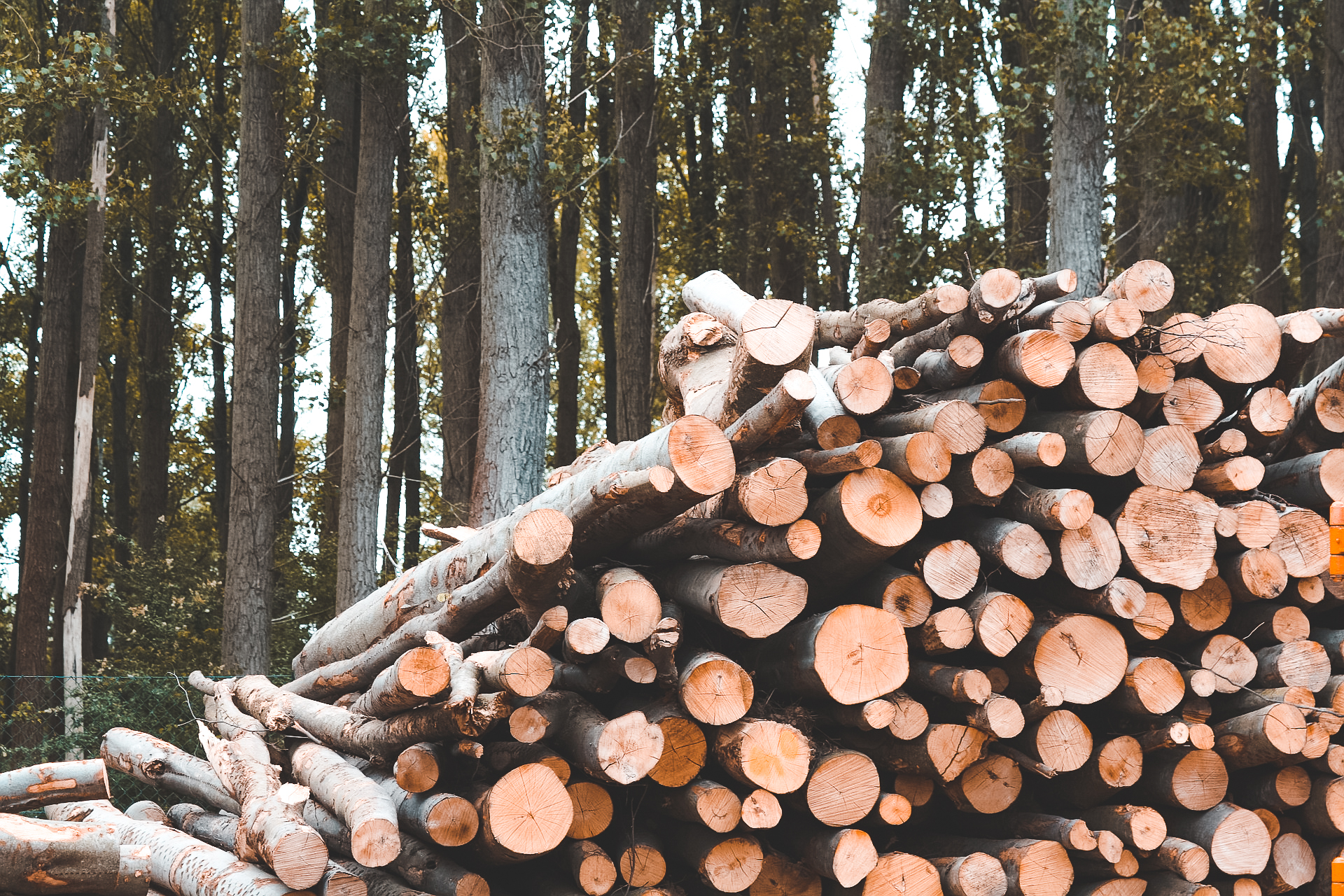 Omgekapte bomen voor biomassa