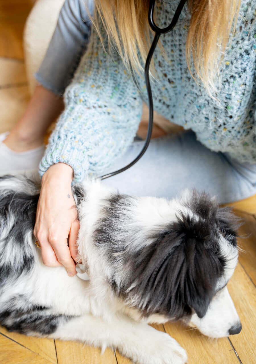 Formulées par un vétérinaire