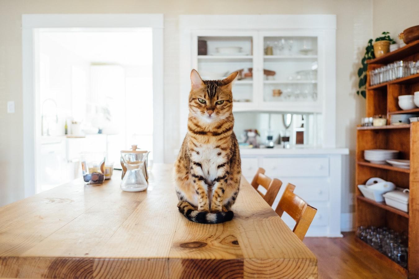 Tout, tout, tout, vous saurez tout sur les miaous.