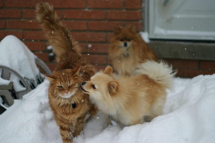 Chiens et chats ne s'entendent-ils vraiment pas?