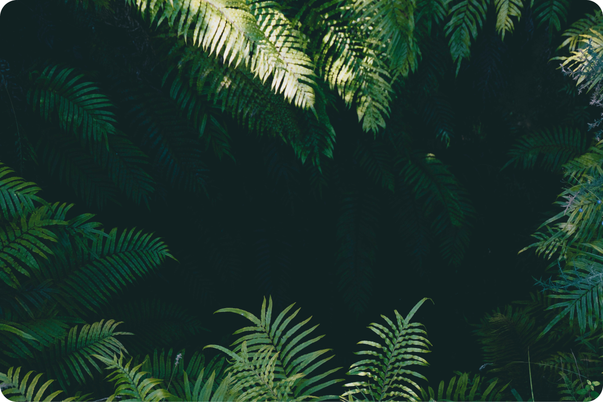 Picture of plants in shade.