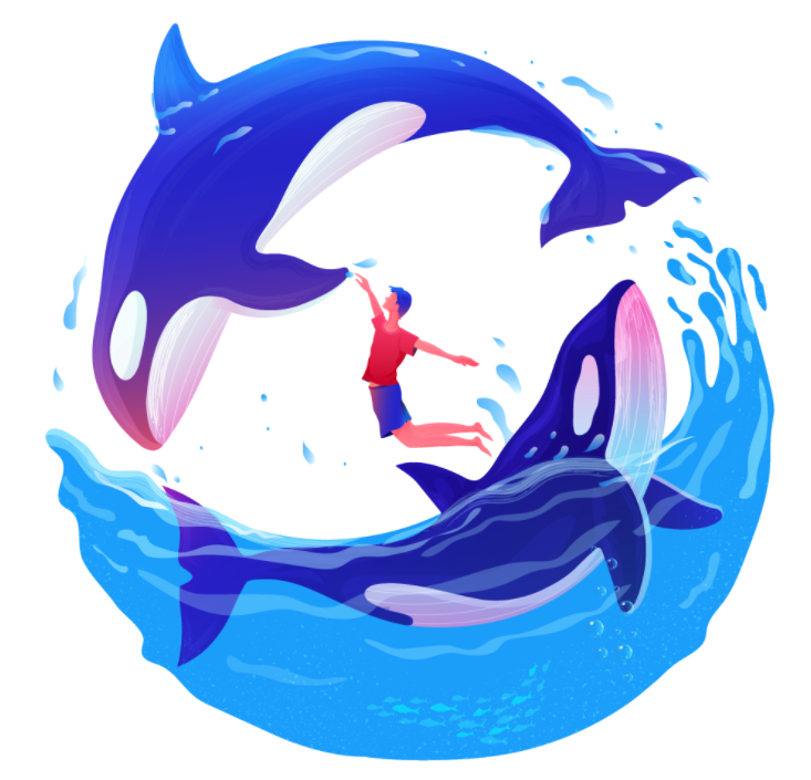 Illustration of two Orcas and a person playing in the water.