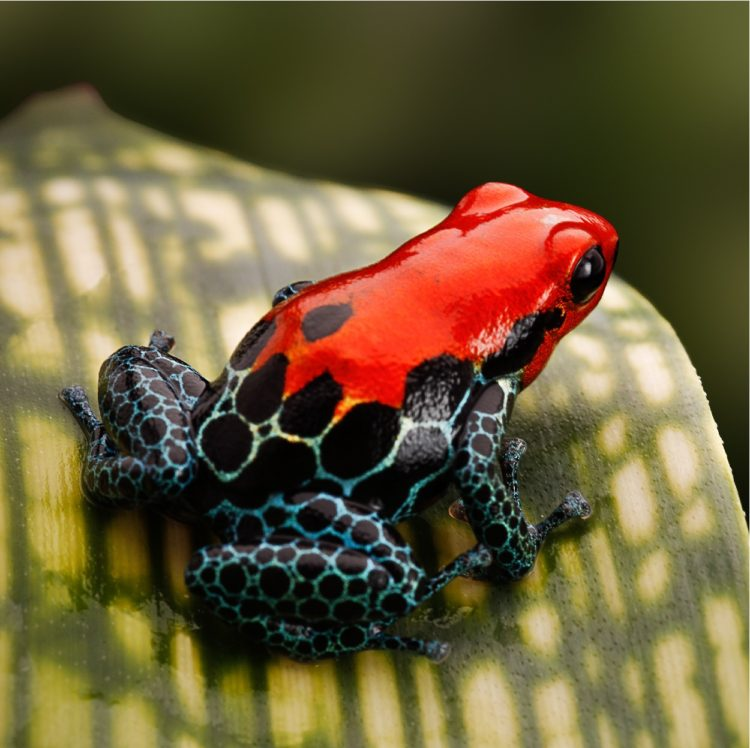 important tasks rare frog