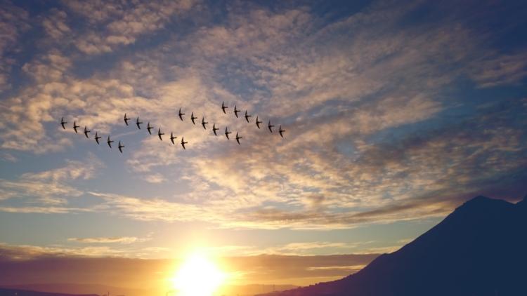 Birds in flight with sun