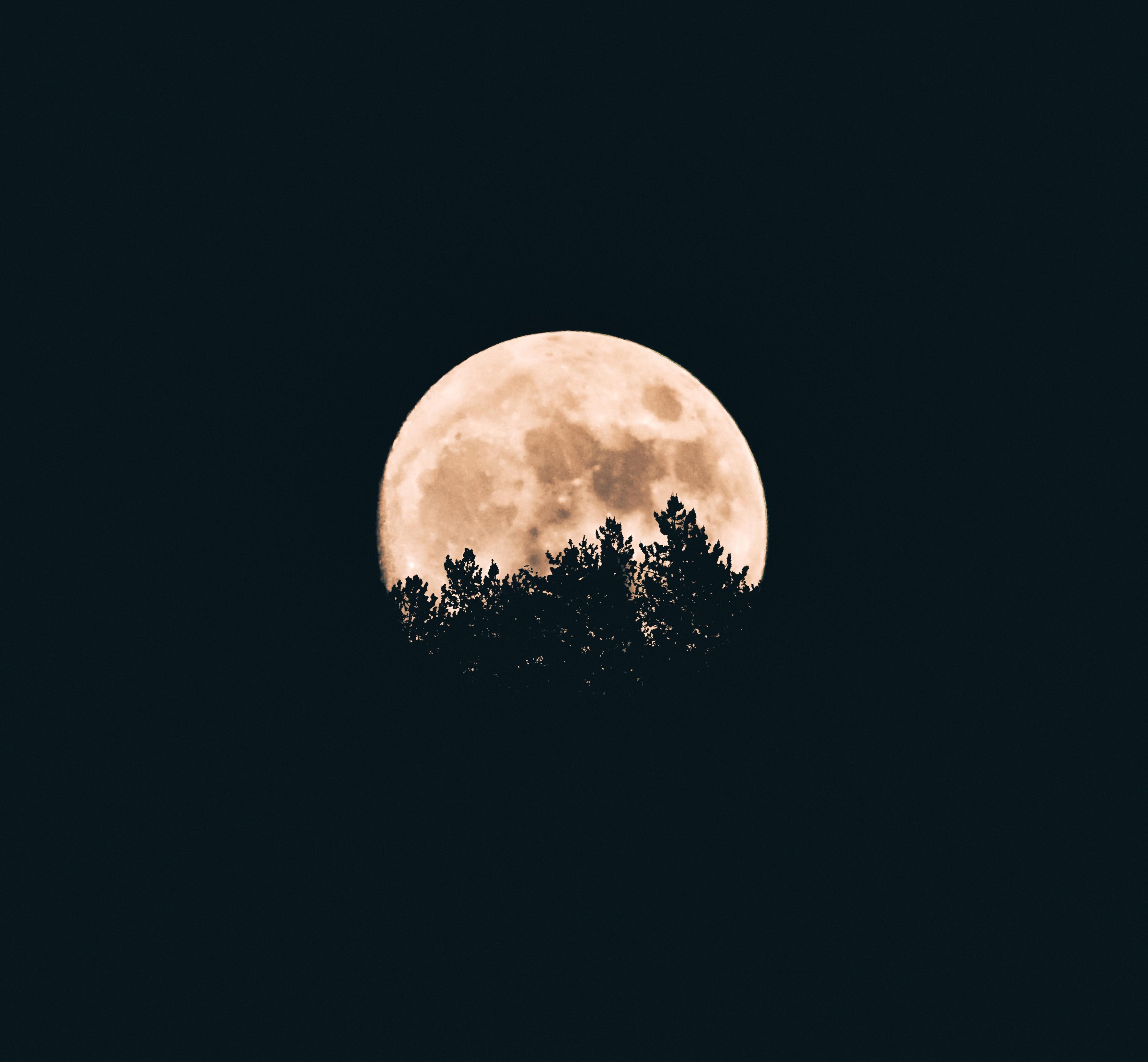 Moon behind trees at night.