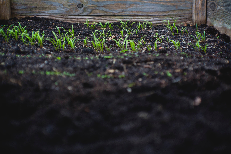 Dark soil with grass.