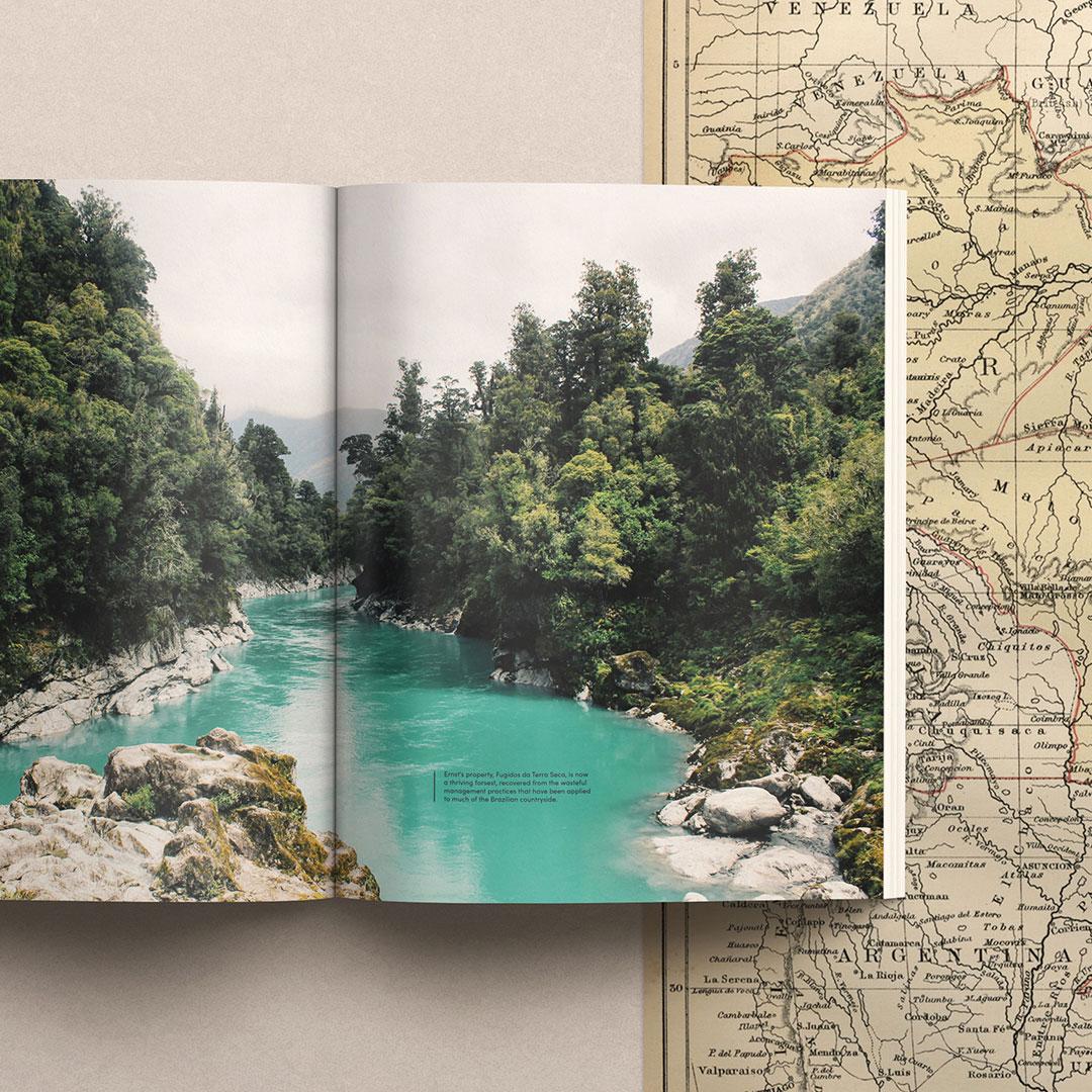 Overstory Magazine