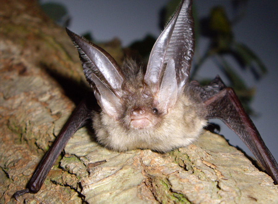 Bat survey at Waltham Place