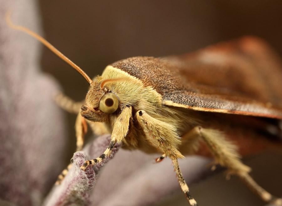 Moth survey at Waltham Place