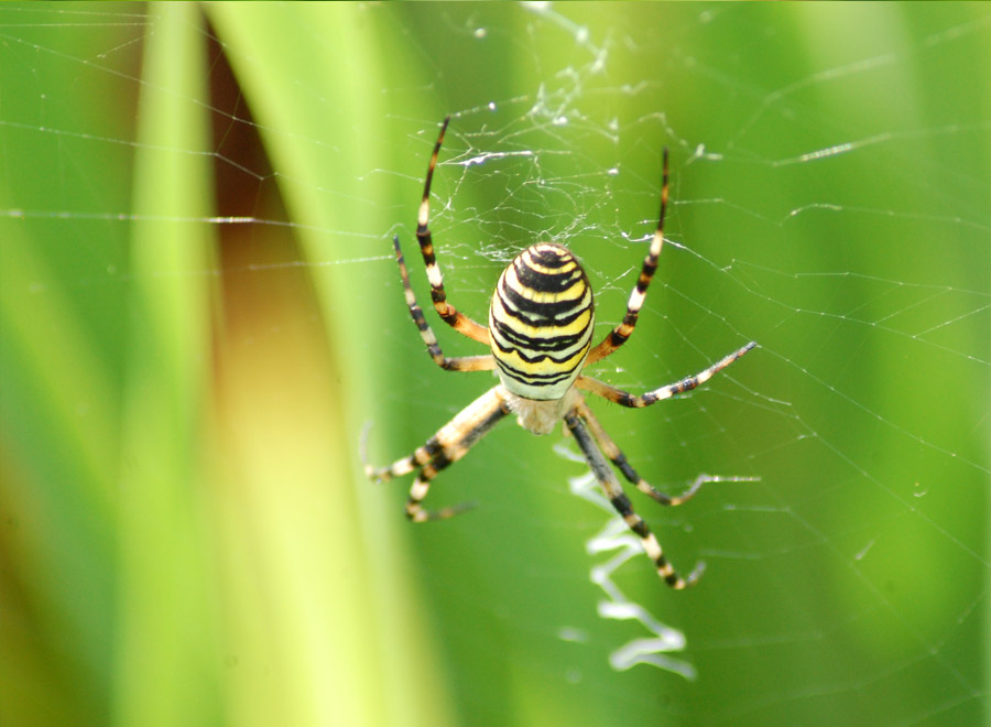 Spider survey at Waltham Place