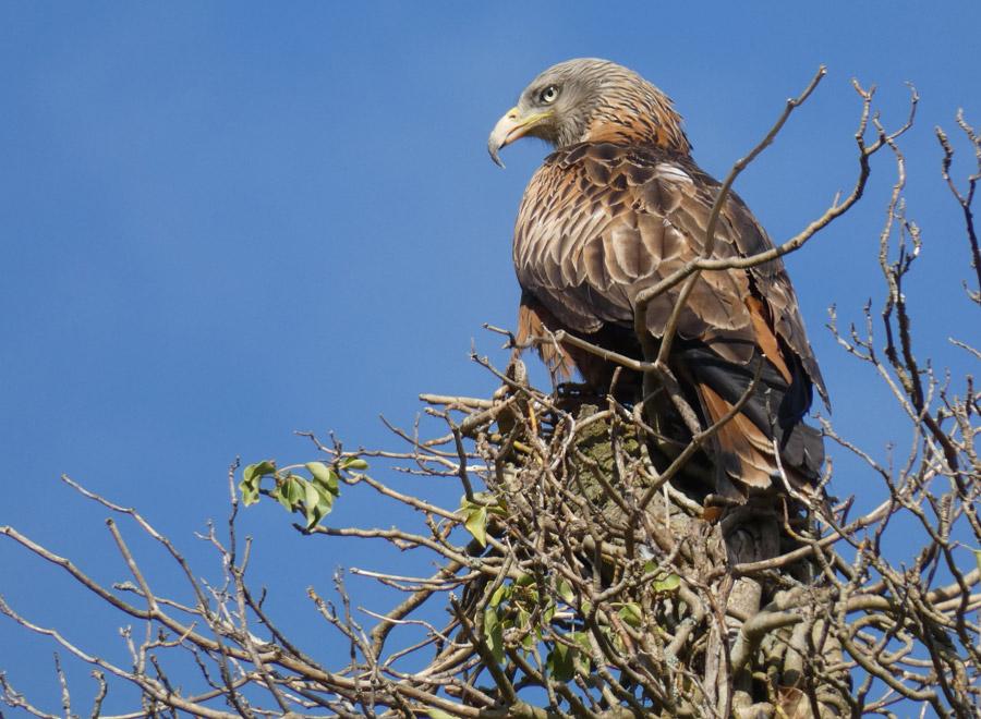 Bird survey at Waltham Place