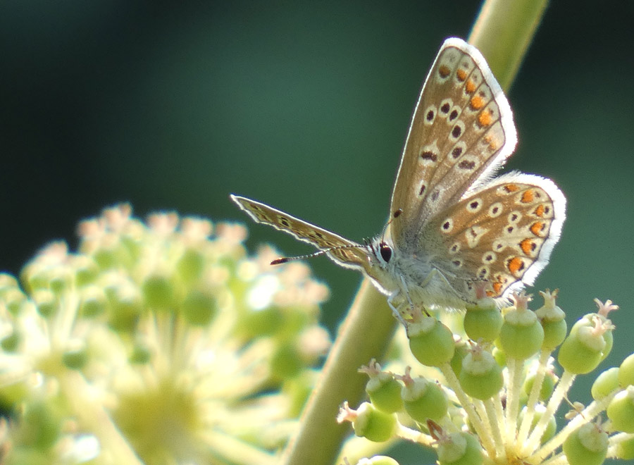Butterfly at Waltham Place
