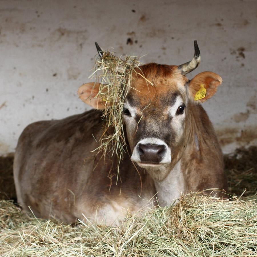 Livestock at Waltham Place