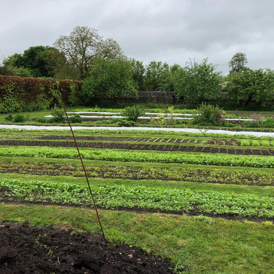 The Kitchen Garden at Waltham Place