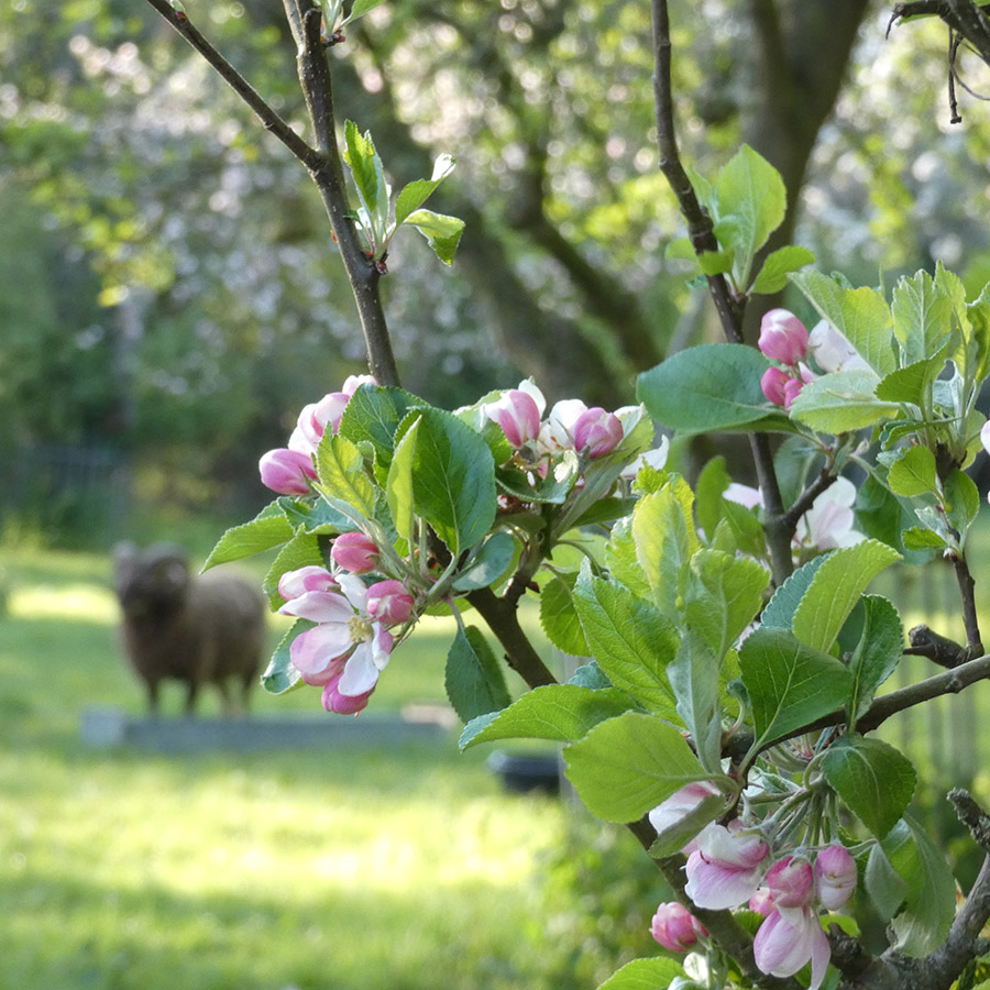 The Orchards at Waltham Place