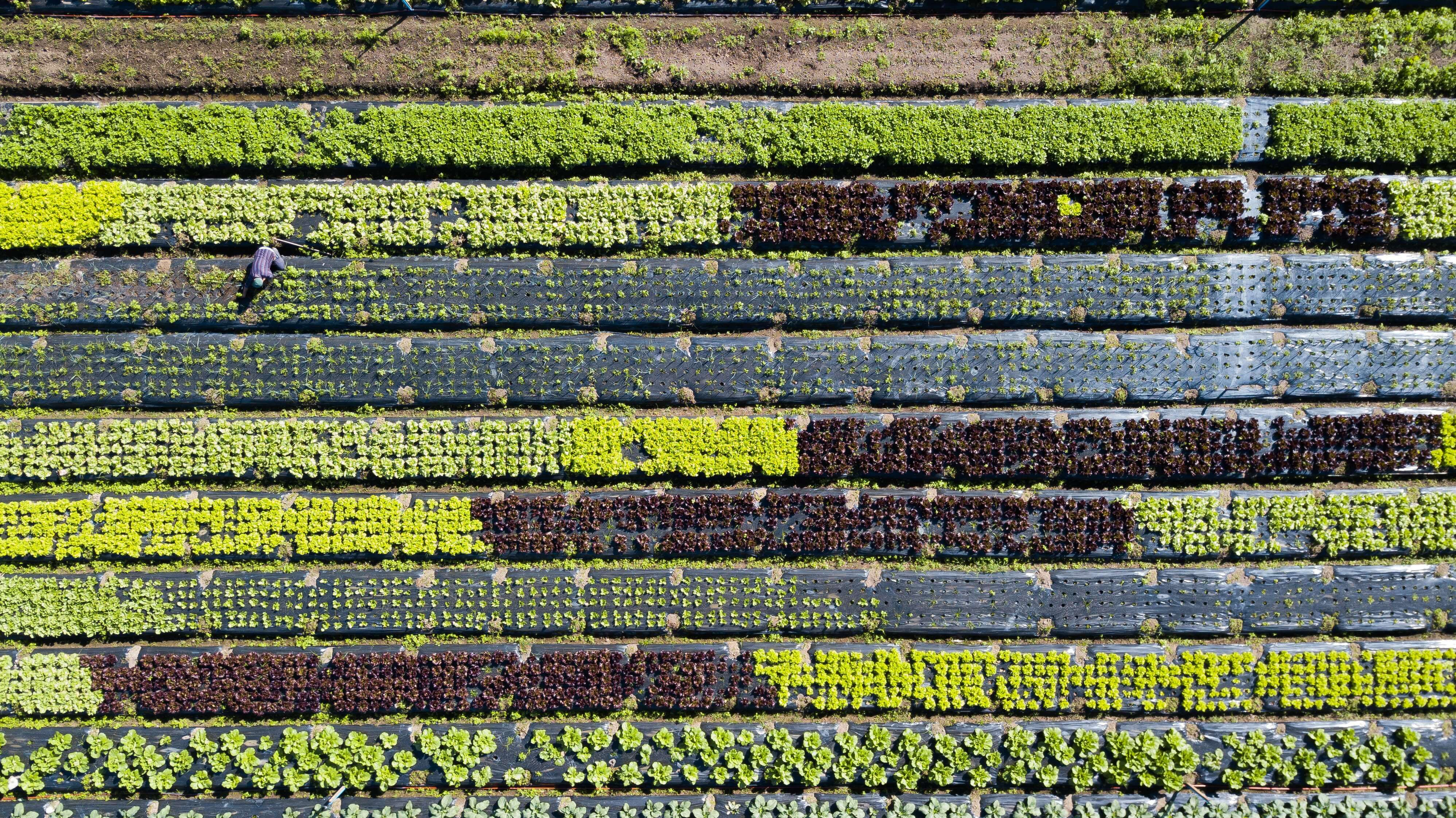 green field sustainable patterns