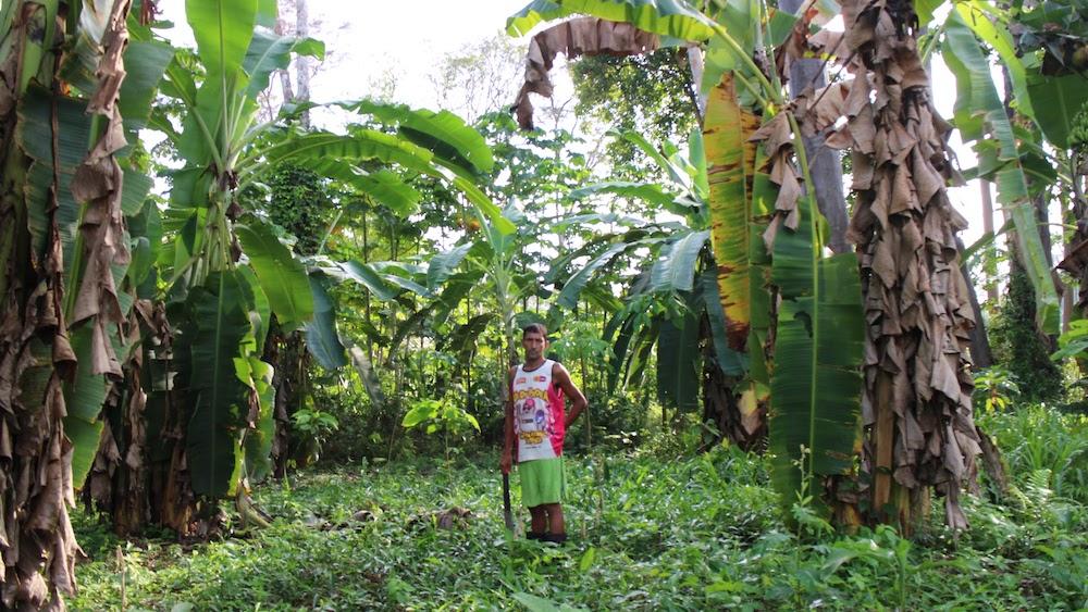 ジャングルの中に立つ一人の農家