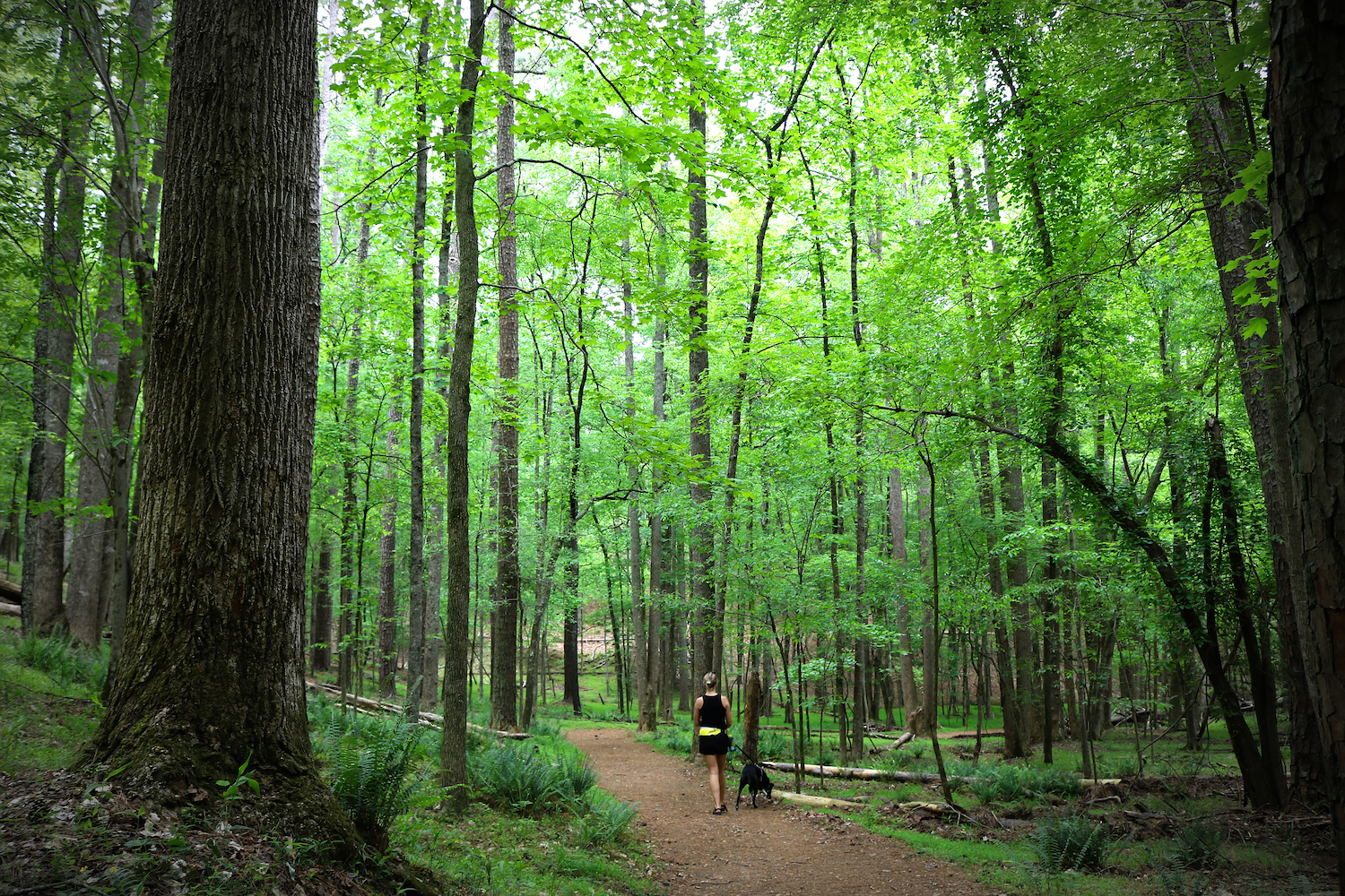 A woman and her dog hiking in the woods.