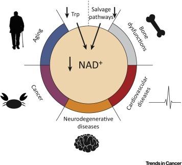 NAD chart