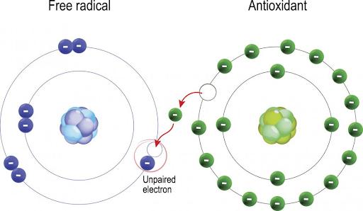free radicals and antioxidants