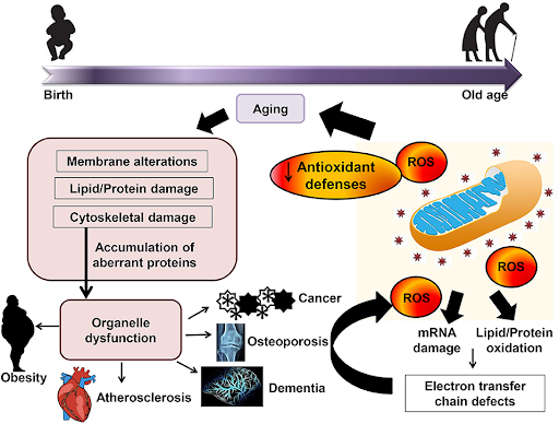 aging and natural degenerative conditions