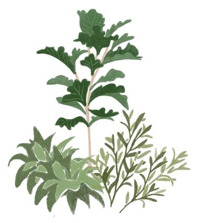A natural plant