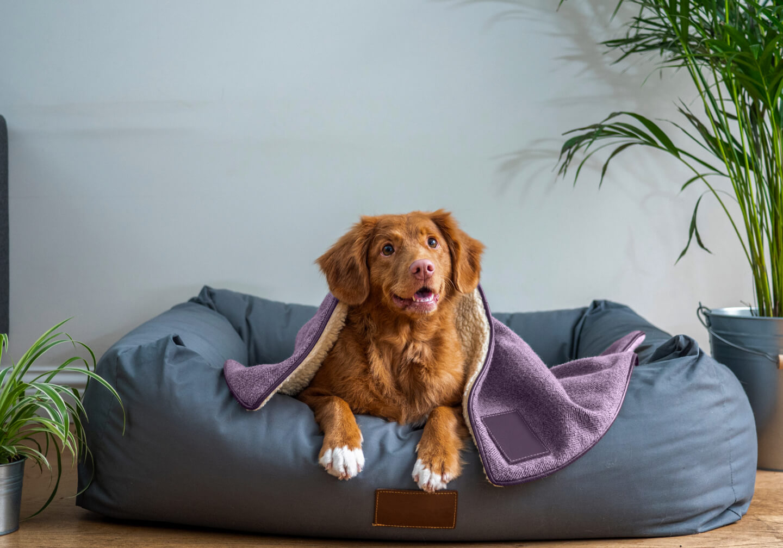 Cãozinho deitado em uma caminha super confortável, coberto por um cobertor bem quentinho